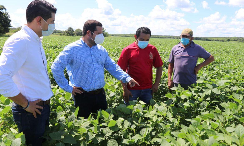 La soya del sur del Yucatán cerrará bien el año
